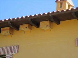 Detalle de los nidos de Navahondilla.