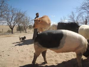 Santuario de Animales (1)