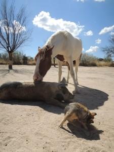 Santuario de Animales (3)