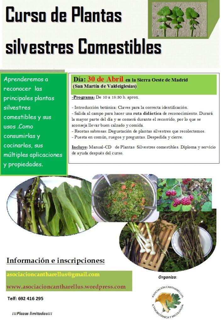 Curso de plantas silvestres comestibles_30Abril