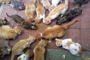 Alimentando gatos en la calle.