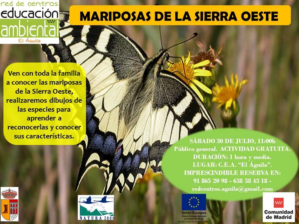 30 Julio- Mariposas