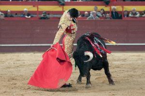 torero y toro triunfadores (1)