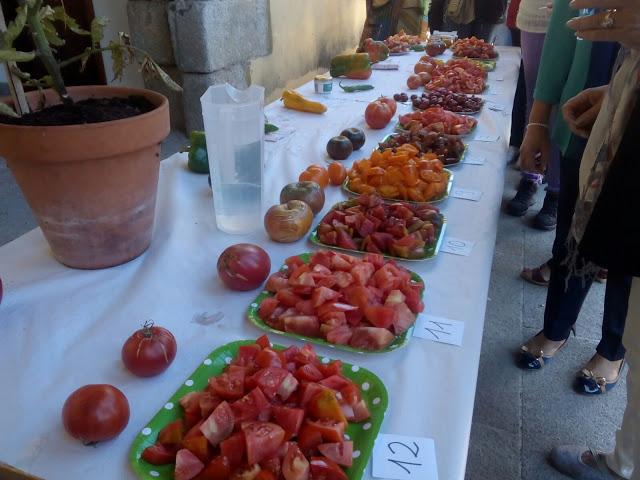 concurso-de-tomates-4