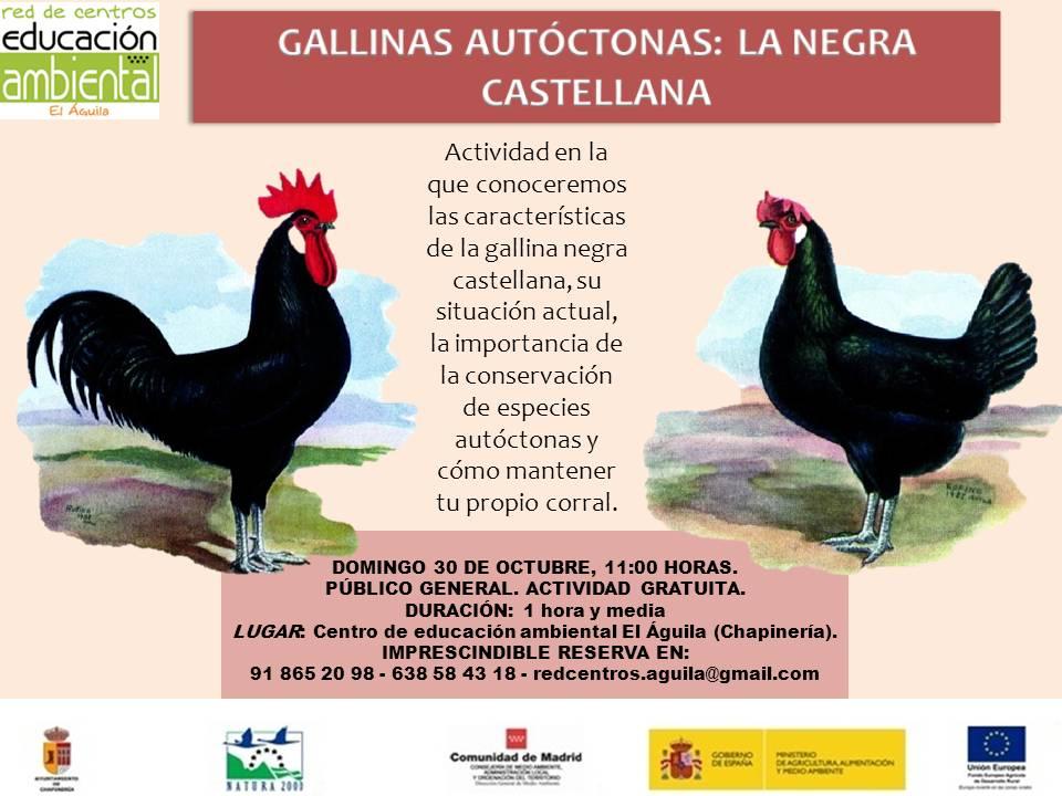 domingo-30-de-octubre-gallina-castellana